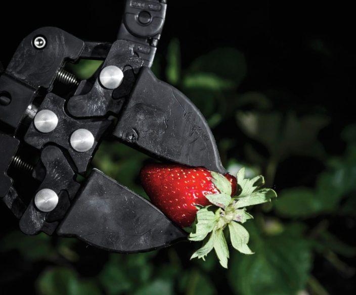 Как искусственный интеллект меняет сельское хозяйство