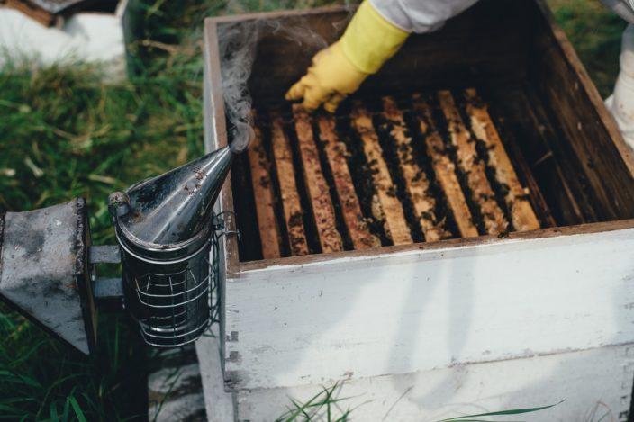 Как роботы помогают пчелам