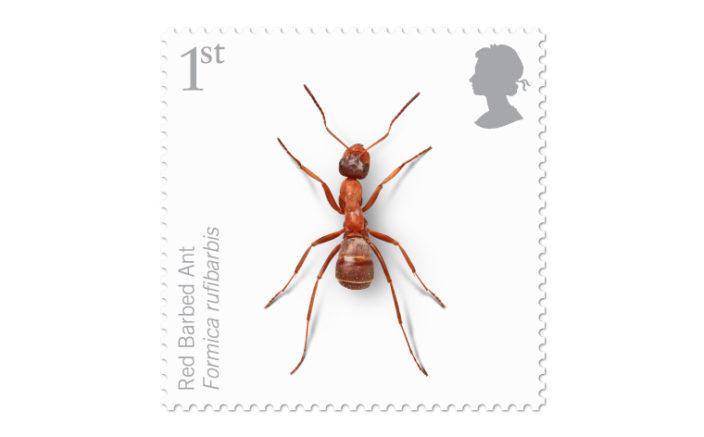 Редкие насекомые на марках